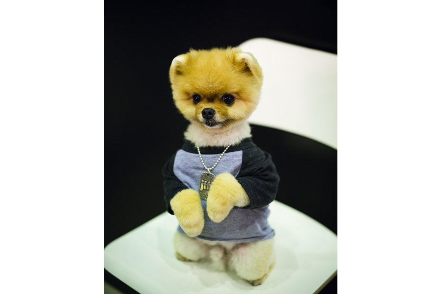 Jiff the Pom at WestEdge Design Fair 2014