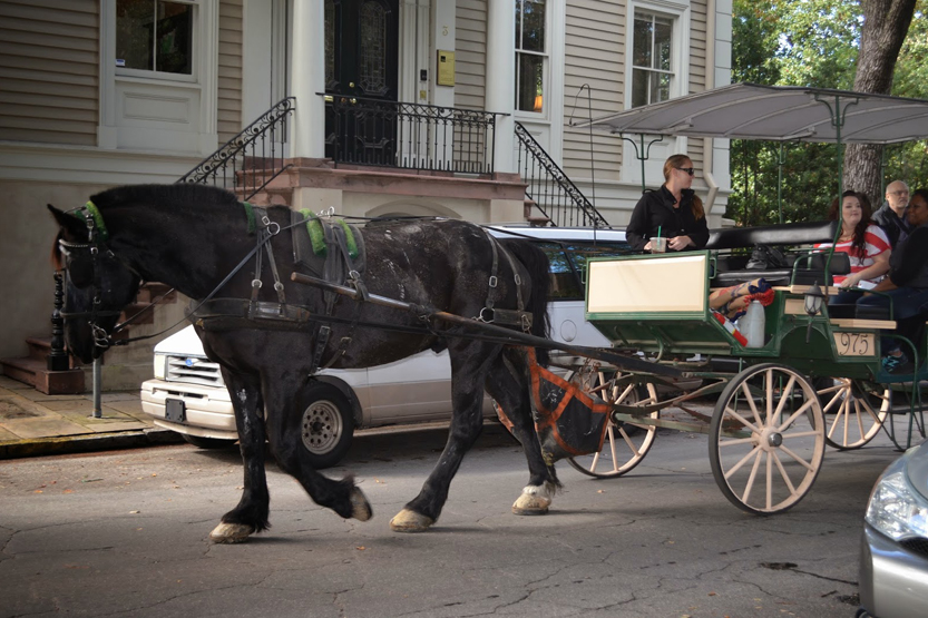 Horse drawn Carriage, Savannah